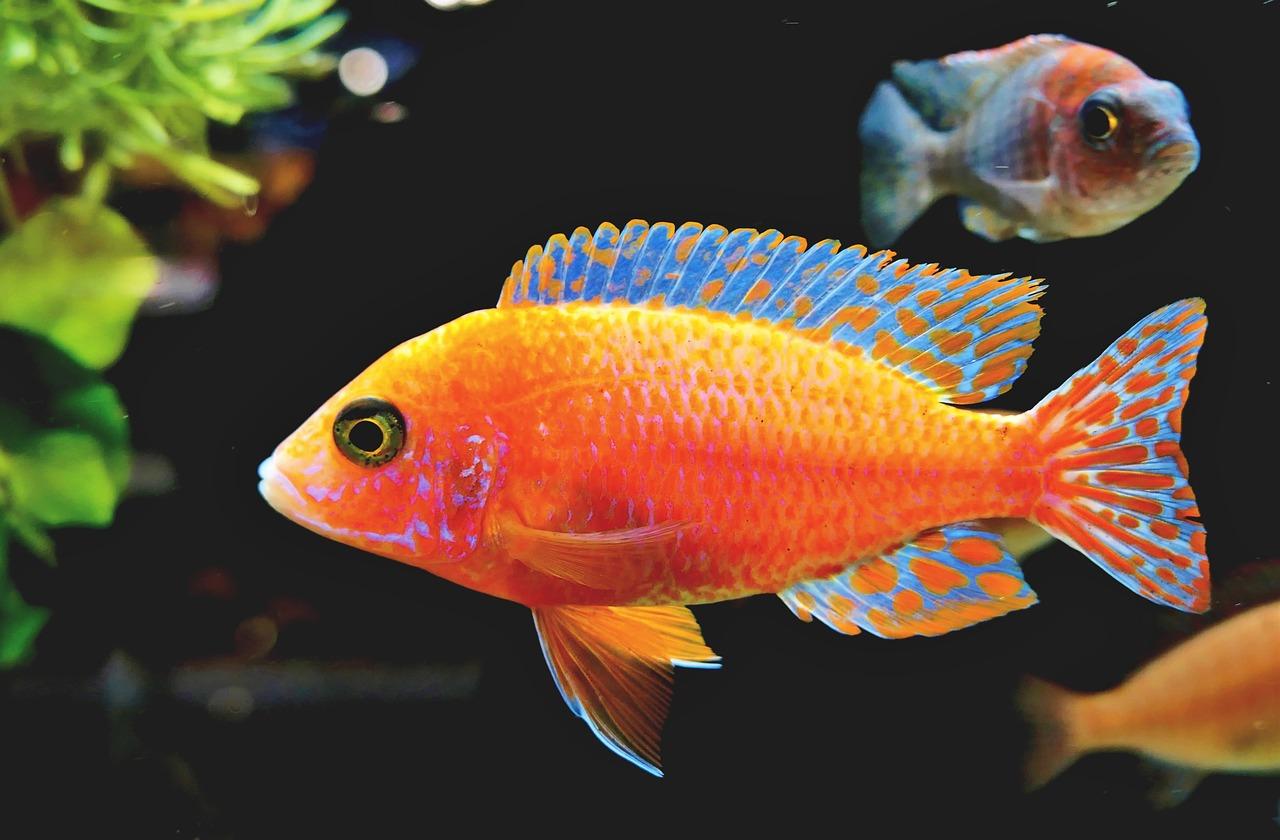 La sindrome del pesce: quando iniziamo a boccheggiare e tirare avanti